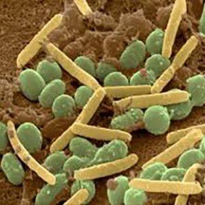 باکتریهای موجود در خاک